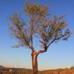 Almond Tree | Finca Xanadu | Adult Only Retreat | Spain