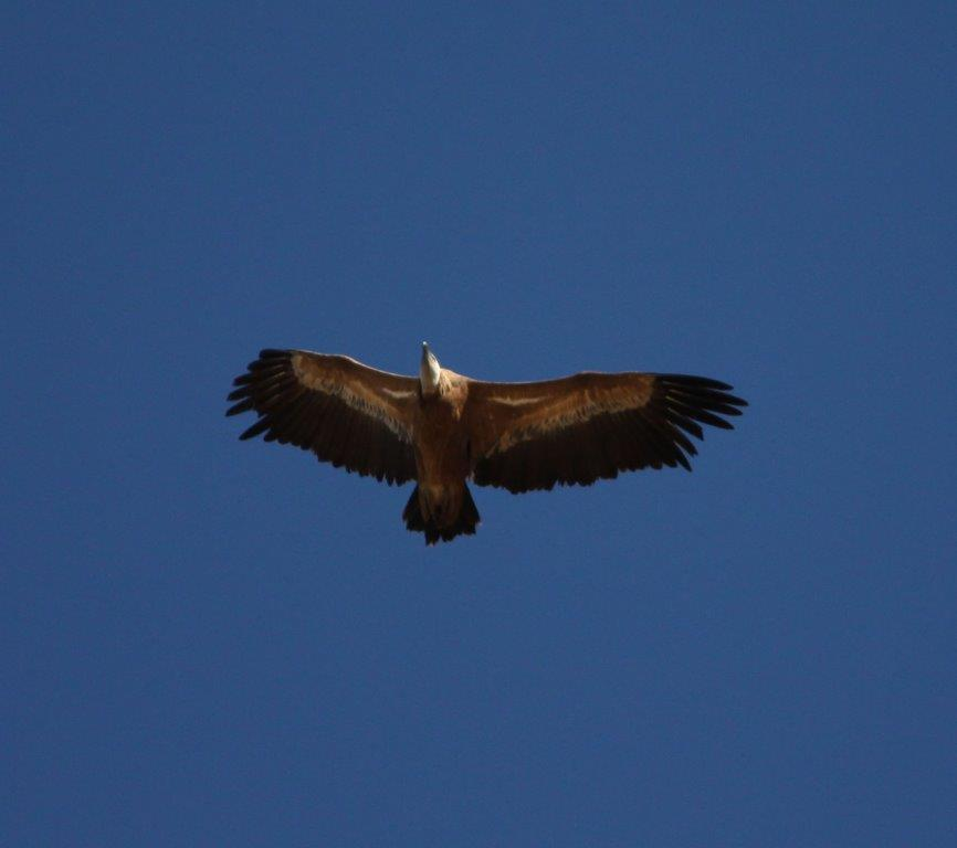 Golden Eagle | Finca Xanadu | Adult Only Retreat | Spain